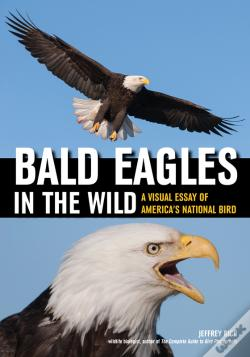 Wook.pt - Bald Eagles In The Wild