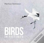 Birds In Pictures