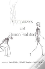Chimpanzees And Human Evolution