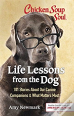 Css Life Lessons Dog