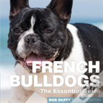Essential Guide To French Bulldogs