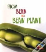 From Bean To Bean Plant