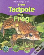 How Things Grow From Tadpole To Frog