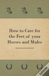 How To Care For The Feet Of Your Horses And Mules