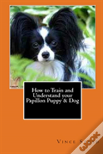 How To Train And Understand Your Papillon Puppy & Dog