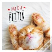 Love Is A Kitten