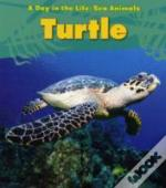 Sea Animals: Sea Turtle