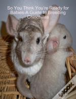 So You Think Youre Ready For Babies - A Guide To Breeding Chinchillas