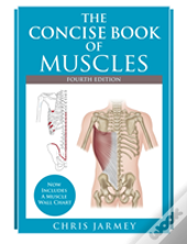The Concise  Book Of Muscles  Fourth Edition
