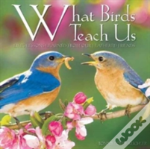 What Birds Teach Us