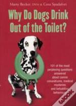 Why Do Dogs Drink Out Of The Toilet